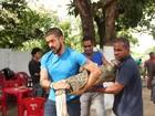 Cachorro late e ajuda a capturar jacaré em quintal de casa no Recife