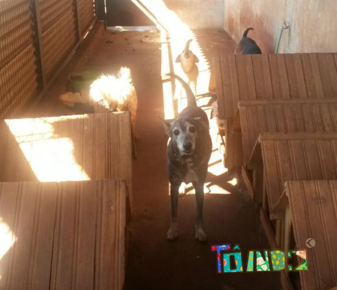 Participe da campanha e ajude os cãezinhos do Silvestre (Foto: Divulgação)