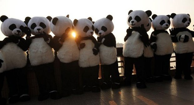 Campanha vai escolher três embaixadores globais que promoverão a conservação de pandas pelo mundo (Foto: Peter Parks/AFP)