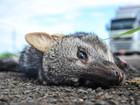 Exposição em Uberlândia alerta para morte de animais na BR-050