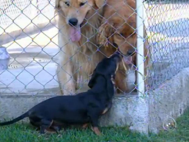 Creches para cães (Foto: Reprodução/TV TEM)