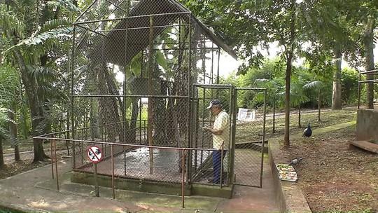 Por falhas na estrutura, Parque das Aves de Apucarana está fechado