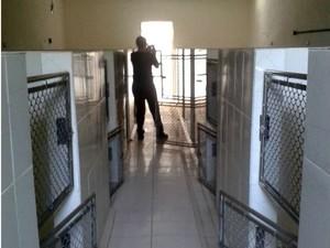 Gaiolas onde ficavam os beagles foram encontradas vazias (Foto: Arquivo Pessoal)
