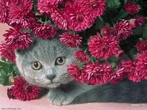 Kitten Flower