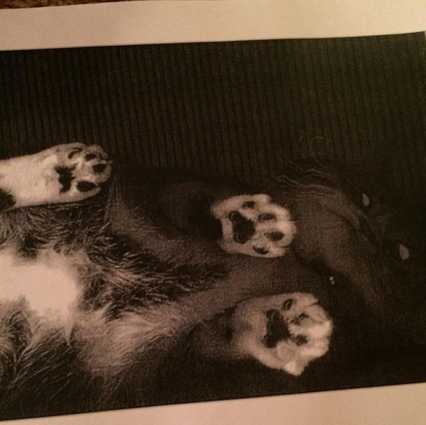 Fotocópia de gato provocou mistério em biblioteca do Wisconsin  (Foto: Reprodução/Twitter/Amy Sleep)