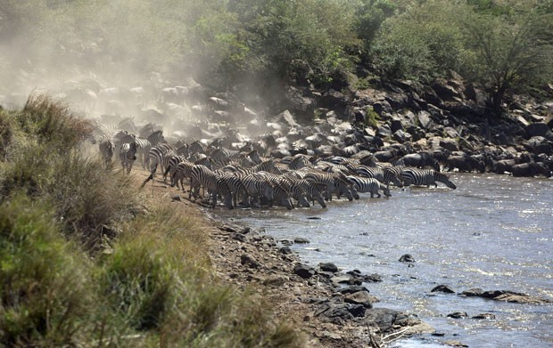 Grupos de gnus e zebras voltam para o Parque Maasai Mara, no Quênia, após migrarem para reserva na Tanzânia (Foto: Rebecca Blackwell/AP)
