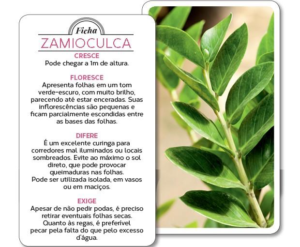 Zamioculca (Foto: Edu Castello/Editora Globo)