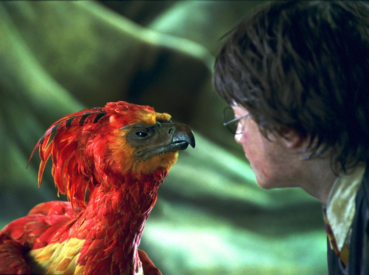 Fawkes, a fênix de Dumbledore (Foto: Divulgação)