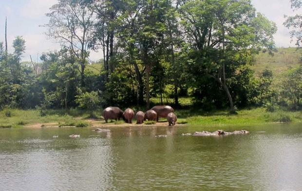 Fazenda de Pablo Escobar vira 'parque' de hipopótamos na Colômbia (Foto: Leandra Felipe/G1)