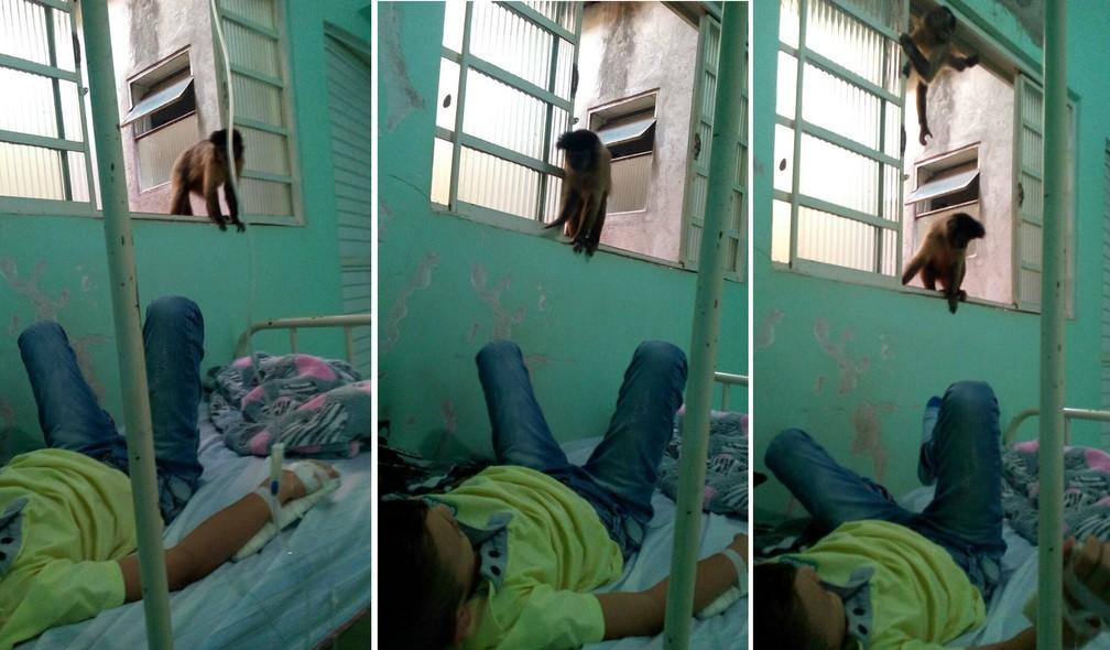Macacos-pregos visitam paciente no único hospital de Mundo Novo, em Mato Grosso do Sul. (Foto: Divulgação)