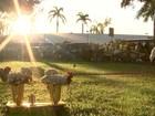 'Era muito dedicado', diz delegado sobre colega morto em Rio Preto