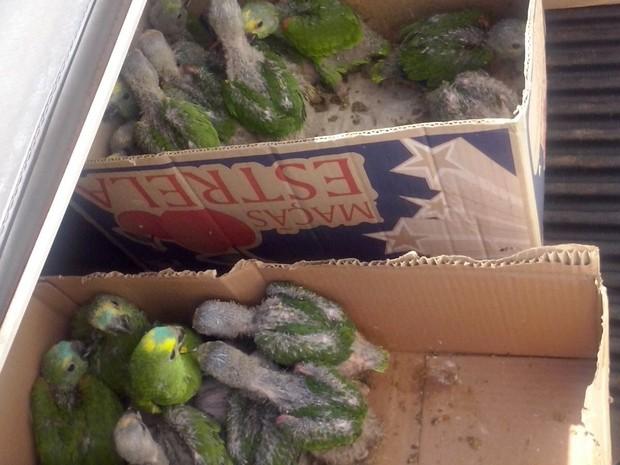 Aves foram levadas para uma associação de proteção aos animais em Assis (SP). (Foto: Polícia Ambiental/Divulgação)
