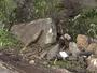 JT2: Pedra de quase 5kg rola de encosta do morro e cai em Rodovia