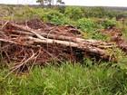 Polícia Ambiental encontra área desmatada em fazenda de Prata