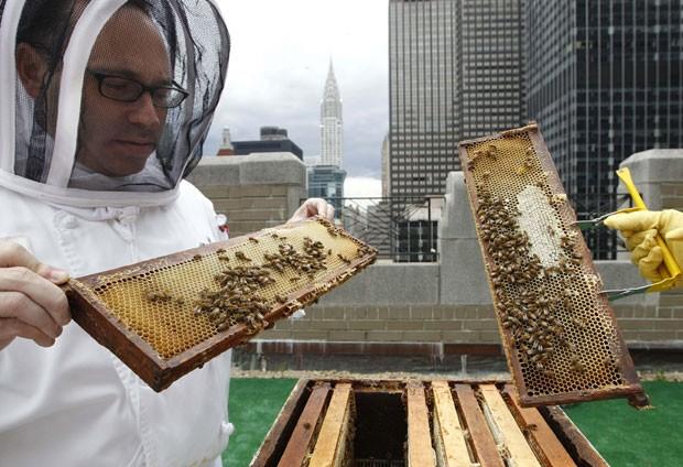 Tomando parte em uma recente tendência em hotéis de luxo da Europa e dos Estados Unidos, o famoso hotel Waldorf Astoria, em Nova York, abriu um criadouro de abelhas no teto de seu edifício no 20º andar, em meio a arranha-céus de Manhattan. (Foto: Kathy Willens/AP)