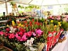 Praça da zona Leste de Boa Vista recebe primeiro 'Festival de Flores'