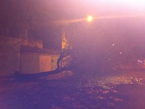 Com forte chuva, árvore caiu na Cohab 2, em Sobral (Foto: Roxane Plácido/Site Notícias de Sobral)