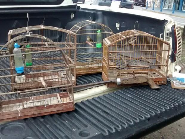 Aves estavam dentro da casa de um homem de 59 anos. Ele não tinha autorização para criar os animais (Foto: Divulgação/ Polícia Militar)