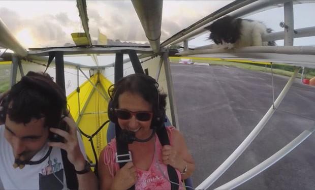 Instrutor Romain Jantot conseguiu pousar a aeronave, e felino não ficou ferido (Foto: Reprodução/YouTube/Romain Jantot)