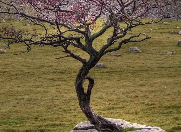 Esta árvore nasceu no topo de uma rocha (Foto: Reprodução)