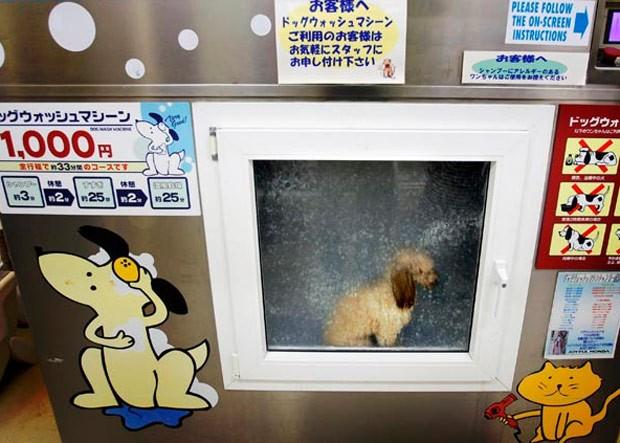 Banho de cachorro dura 30 minutos  (Foto: Itsuo Inouye/AP Photo)