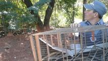 Polícia Ambiental apreende aves silvestres em Araçatuba  (Divulgação/Polícia Ambiental)