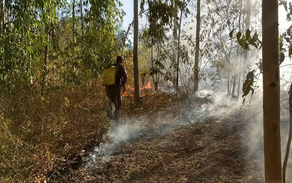 Incêndio ocorreu às margens da BR-135 (Foto: Bombeiros Militares da Bahia/Divulgação)