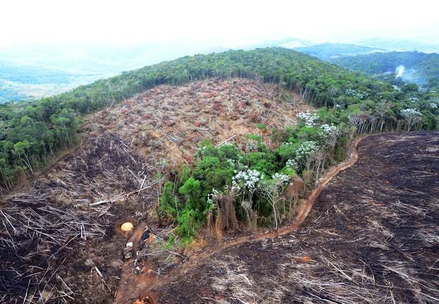 Zerar o desmatamento é uma das metas do Brasil anunciadas pela presidente Dilma Rousseff (Foto: Welington Pedro de Oliveira)