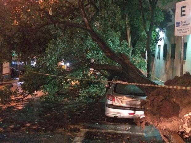 Árvore caiu sobre carro na Rua Santo Amaro, na região central de São Paulo (Foto: Roney Domingos/G1)