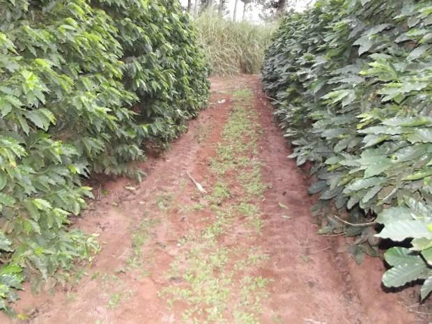 Corpo do travesti foi encontrado às margens de cafezal em Arandu (Foto: André Silva/ Site Portal Arandu)