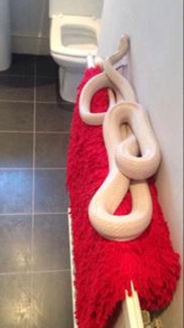 Adolescente britânica fica apavorada ao flagrar cobra de 1,8 m no banheiro (Foto: Reprodução/Twitter/Katie Storey )