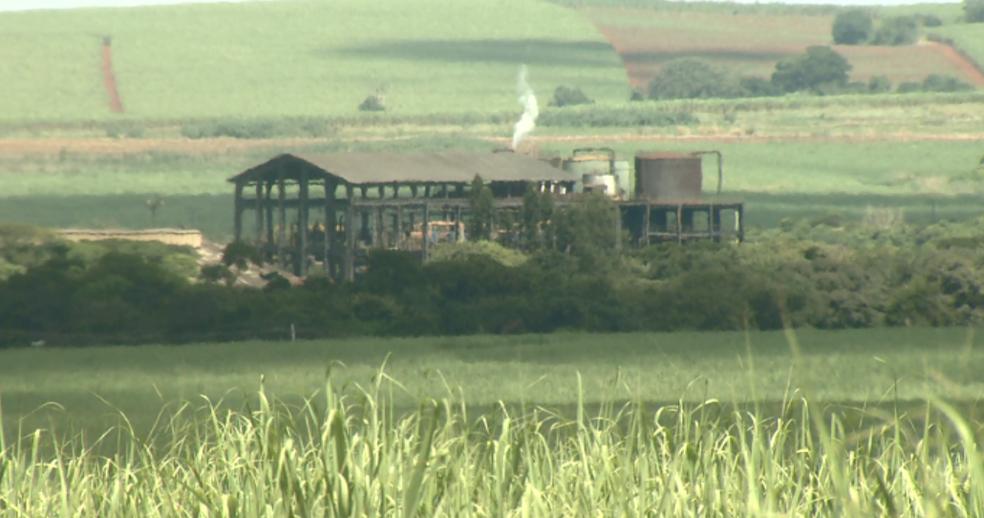 Produção de açúcar contribuiu para melhorar o setor sucroenergético na região Centro-Sul  (Foto: Ronaldo Oliveira/EPTV)