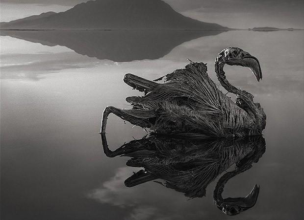 Flamingo morto e calcificado no lago Natrão, na Tanzânia (Foto: Nick Brandt)