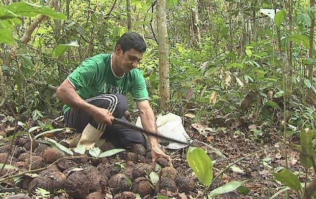 Principal atividade dos moradores da reserva é a extração de castanha e látex (Foto: Reprodução TV Acre)