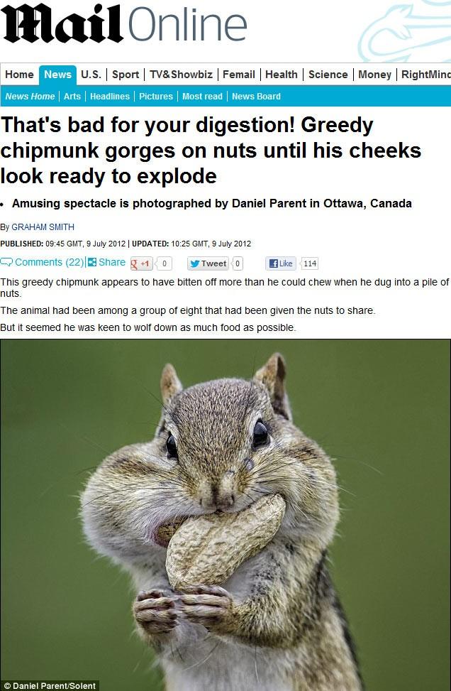 Esquilo comilão foi flagrado tentando colocar duas nozes de uma vez na boca em Ottawa, no Canadá. (Foto: Reprodução/Daily Mail)