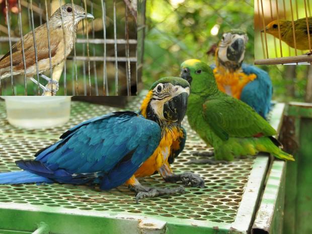 Entre as espécies encontradas estão papagaio e araras canindé (Foto: Antônio Gonçalves/Ascom Palmas)