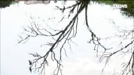 Gabeira: Águas de Caxambu (MG): recurso hídrico ou mineral?
