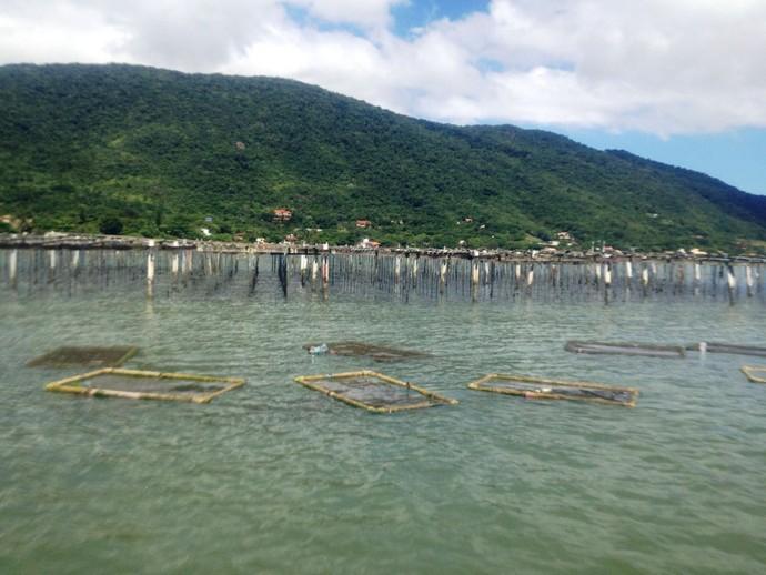 Litoral catarinense é o maior produtor de ostras no país (Foto: RBS TV/Divulgação )