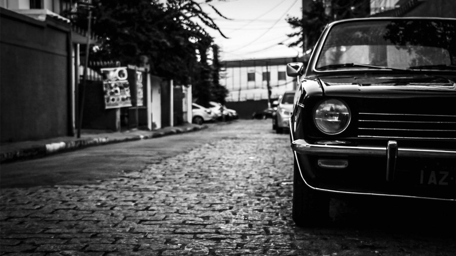 Opala preto  (Foto: Rodrigo Canisella Fávero / Creative Commons)