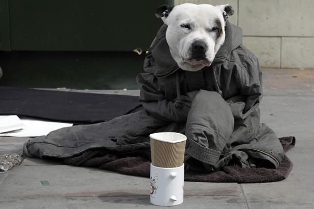 Vestido com jaqueta, cão ajuda o dono a pedir esmolas em Londres (Foto: Stefan Wermuth/Reuters)