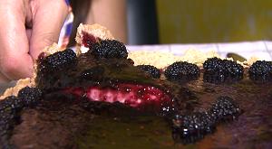 Torta de amora - Plug (Foto: Divulgação/RPC)