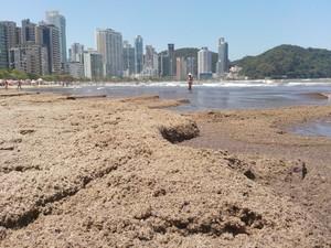 Moradores afirmaram que material orgânico exalava forte mau cheiro (Foto: Luis Carlos de Souza/RBS TV)