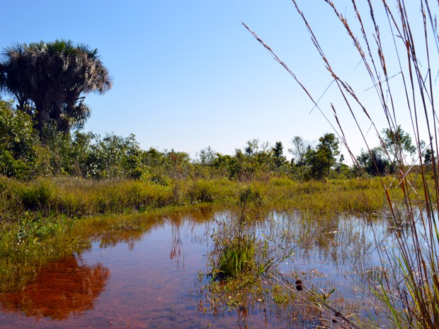 Da água consumida em Campo Grande, 40% vem da represa do córrego Guariroba, que tem nascentes na APA do Guariroba (Foto: Anderson Viegas/Do Agrodebate)