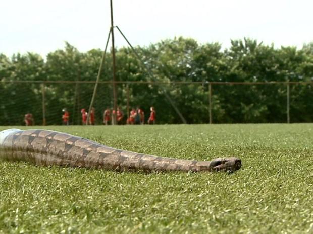 Cobra não se importou com as atividades dos jogadores no campo do centro de treinamento (Foto: Reprodução/EPTV)