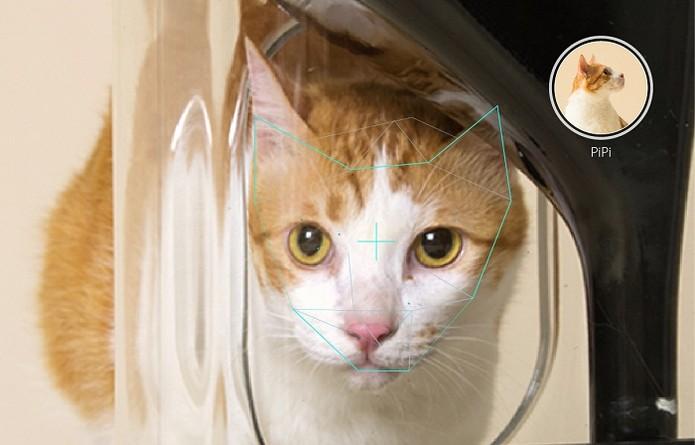 ac7b9ffa970 Imagem do gato se alimentando é transmitida para o dono (Foto  Reprodução  Indiegogo