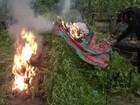 Operação destrói 60 mil pés de maconha no nordeste do Pará