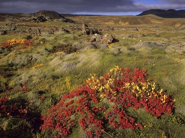 Paisagem típica da tundra, na Islândia (Foto: Wolfgang Fuchs/Bilderberg/AFP/Arquivo)