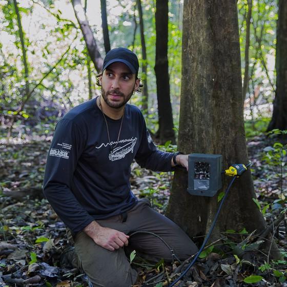 O biólogo Daniel Gomes instala uma das armadilhas fotográficas usadas no estudo. Ele foi o primeiro a pesquisar a concentração de jaguatiricas na Amazônia brasileira (Foto: Instituto Mamirauá/Divulgação )