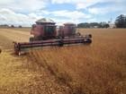 Evento debate mercado de grãos em Sorriso (MT) nesta quarta, dia 28