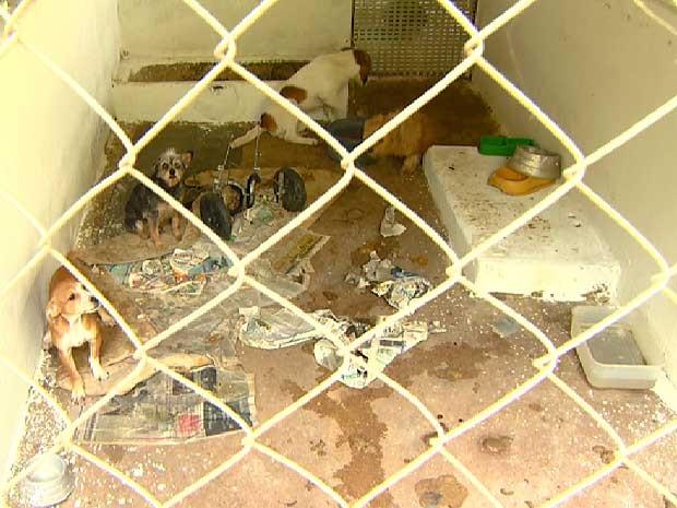 Abrigo de entidade protetora de animais de Campinas é flagrado em condições irregulares pela polícia (Foto: Ricardo Custódio/EPTV)